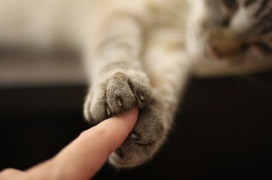 cat-holding-hands-finger-paws-human-love-relationships-pets