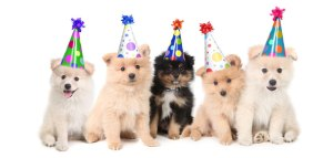 puppy-feest1