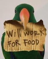 Îmbogățirea comportamentală la papagali – ediția aopta
