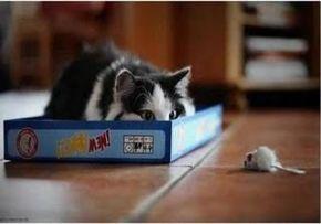 Un prim pas spre o pisică fericită – a treiaediție