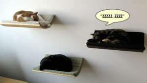 cat_shelves