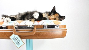 Totuși, cum ne facem pisica mai fericită?  – a patraediție