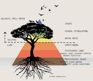Piramida nevoilor  - WAZA