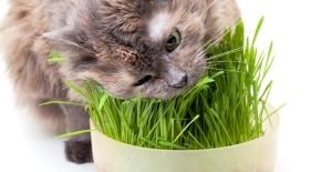 De ce mănâncă iarbă pisicile și câinii – ediția anoua