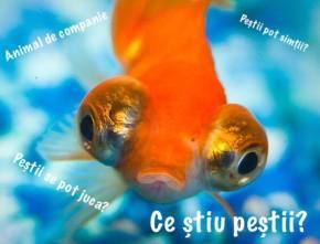 Ce știu peștii? – ediția a13-a
