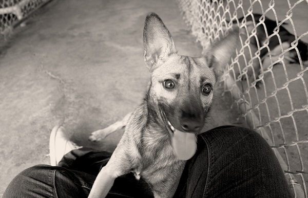 adopt-a-shelter-dog
