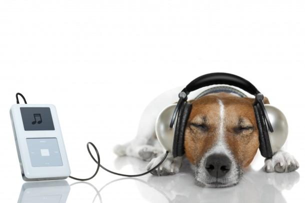 caine-asculta-muzica