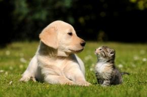 Câini și pisici – ediția23