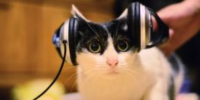 Muzică pentru pisici – ediția24