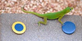 Animal de companie – ediția 35 – Reptilele șiinteligența