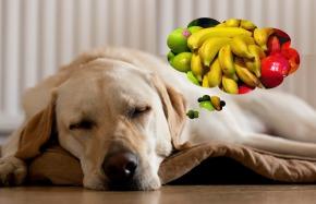 Legume și fructe pentrucâini?